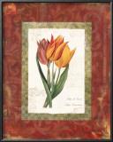 Tulip de Gesner Posters by Carol Robinson