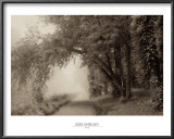 Fog III Prints by Igor Svibilsky