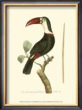 Crimson Birds VI Posters by Frederick P. Nodder