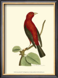 Crimson Birds III Prints by Frederick P. Nodder