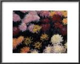 Chrysanthemum, 1897 Print by Claude Monet