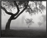 Into the Mist Prints by Monte Nagler