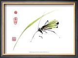 Grasshopper Posters by Nan Rae