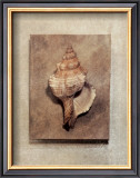 Seashell Study III Prints by Julie Nightingale