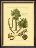 Printed Exotic Palm I Prints by Pierre-Joseph Buchoz