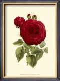 Magnificent Rose I Posters by Ludwig Van Houtte