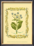 Borage Print by Wendy Russell