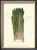 Asparagus Officinalis Prints by Elissa Della-piana
