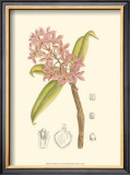 Orchid Plenty III Prints by Samuel Curtis