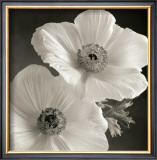Poppy Study I Prints by Sondra Wampler