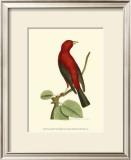 Crimson Birds III Posters by Frederick P. Nodder