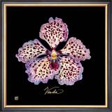 Vivid Orchid V Prints by Ginny Joyner