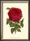 Magnificent Rose II Art by Ludwig Van Houtte