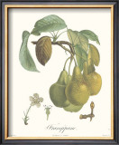 Pears, Frangipane Poster by Francois Langlois