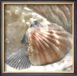 Coral Shell III Posters by Donna Geissler