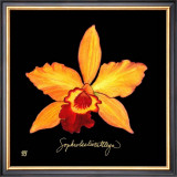 Vivid Orchid VI Print by Ginny Joyner
