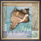 Restful Shell Prints by Todd Williams