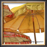 Umbrellas Italia II Poster by Terry Lawrence