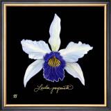 Vivid Orchid IV Prints by Ginny Joyner