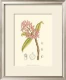 Orchid Plenty III Print by Samuel Curtis