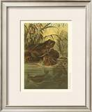 Pond Frogs Print by Louis Prang