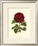Magnificent Rose III Prints by Ludwig Van Houtte
