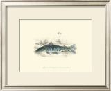 Lizars' Game Fish II Prints by W.h. Lizars