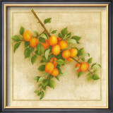 Abricots de Nancy Print by Vincent Perriol
