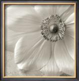 Poppy Study II Posters by Sondra Wampler