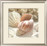 Coral Shell II Poster by Donna Geissler