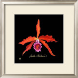 Vivid Orchid II Posters by Ginny Joyner