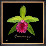 Vivid Orchid I Posters by Ginny Joyner