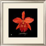 Vivid Orchid IX Art by Ginny Joyner