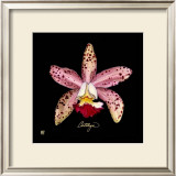 Vivid Orchid III Prints by Ginny Joyner