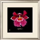 Vivid Orchid VIII Prints by Ginny Joyner