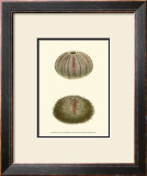Jewels of the Sea IV Prints by Frederick P. Nodder