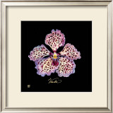 Vivid Orchid V Posters by Ginny Joyner