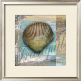 Tranquil Shell Posters by Todd Williams