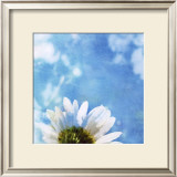 Daisies III Prints by Ingrid Blixt
