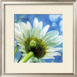 Daisies I Prints by Ingrid Blixt