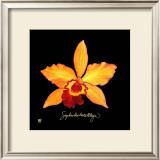 Vivid Orchid VI Prints by Ginny Joyner