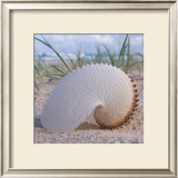 Paper Nautilus Prints by Mark Goodall
