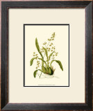 Orchid Array IV Print by Drake 