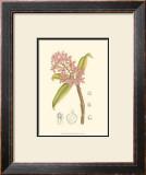 Orchid Plenty III Prints by Samuel Curtis