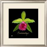 Vivid Orchid I Prints by Ginny Joyner