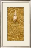 Ripple Shell I Posters by Tony Koukos