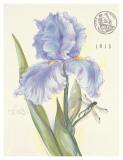 Claire's Garden Iris Posters by Elissa Della-piana