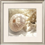 Coral Shell I Prints by Donna Geissler