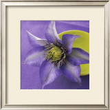 Clematis and Bowl Print by Catherine Beyler