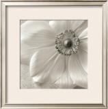 Poppy Study II Prints by Sondra Wampler